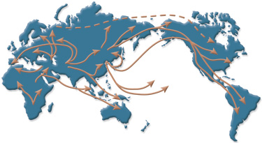 Visualising migration flow patterns globally